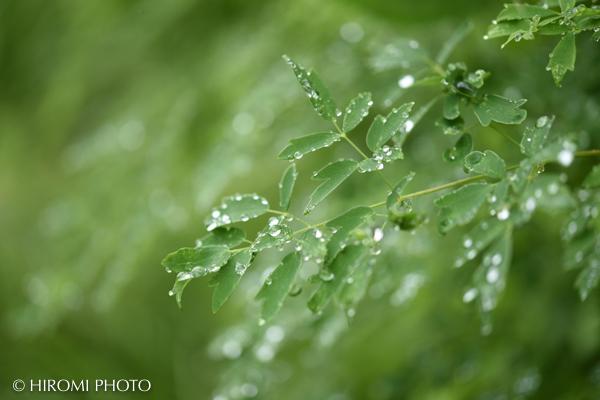キラキラの水滴
