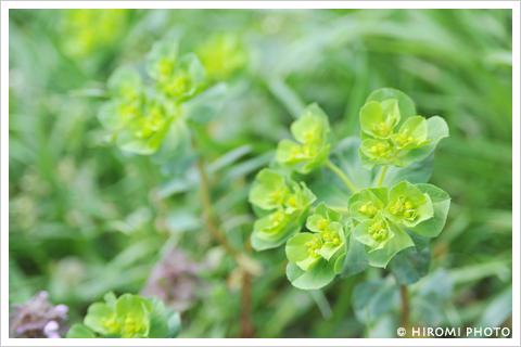 愛らしい草花