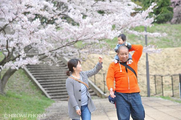 桜フォト_1375s