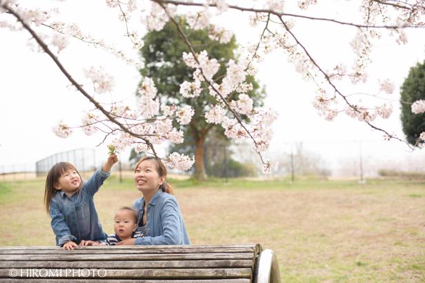 桜フォト_138s
