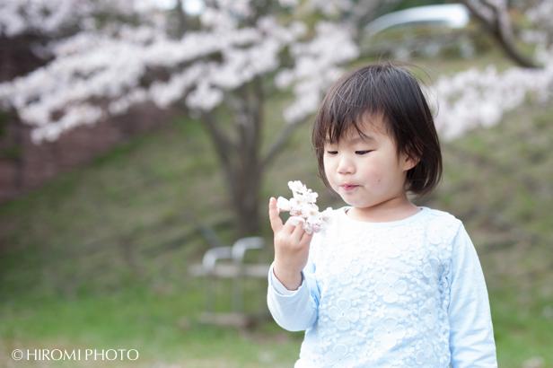 桜フォト_1576s